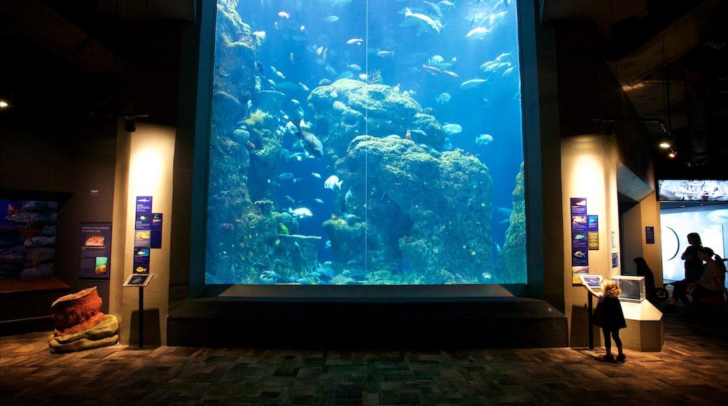 South Carolina Aquarium que inclui vida marinha e vistas internas