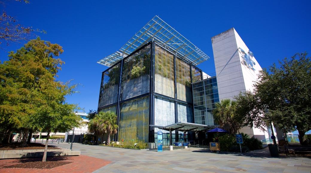 South Carolina Aquarium mostrando arquitetura moderna e uma praça ou plaza