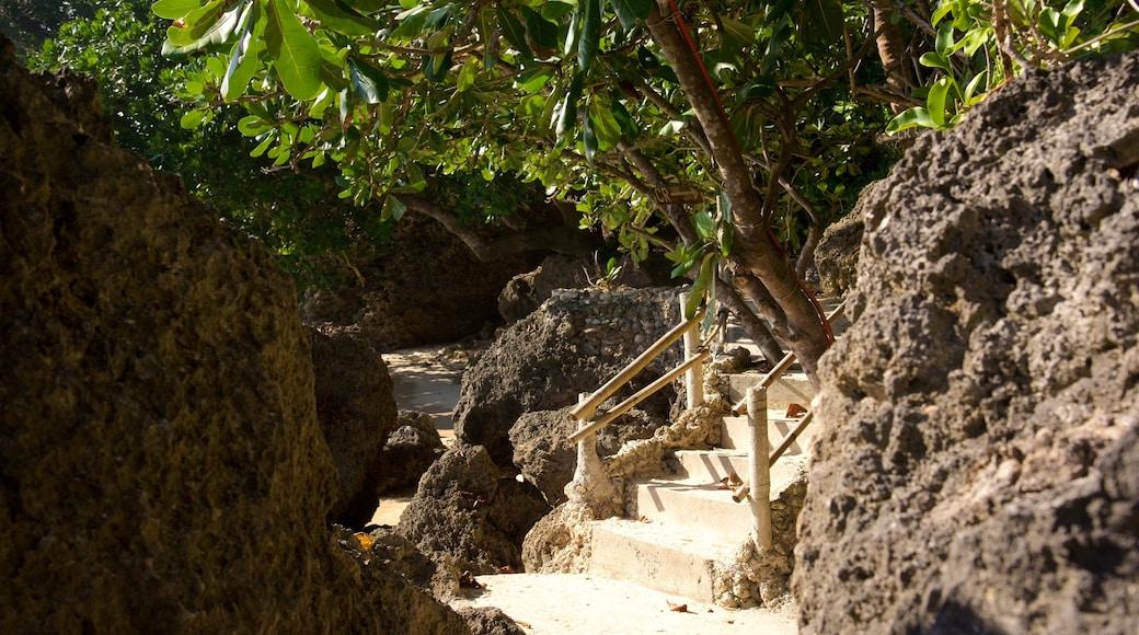 Balinghai Beach which includes tropical scenes and a sandy beach