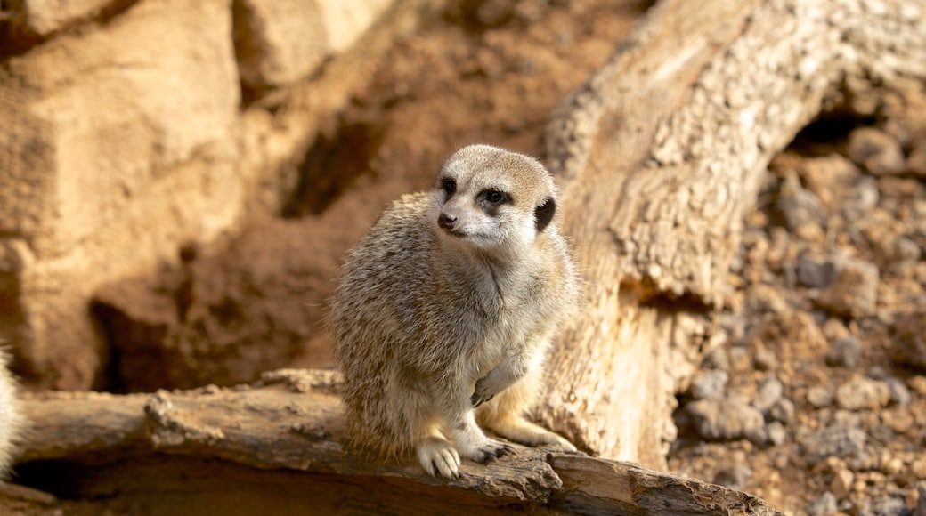 Houston Zoo que inclui animais de zoológico e animais