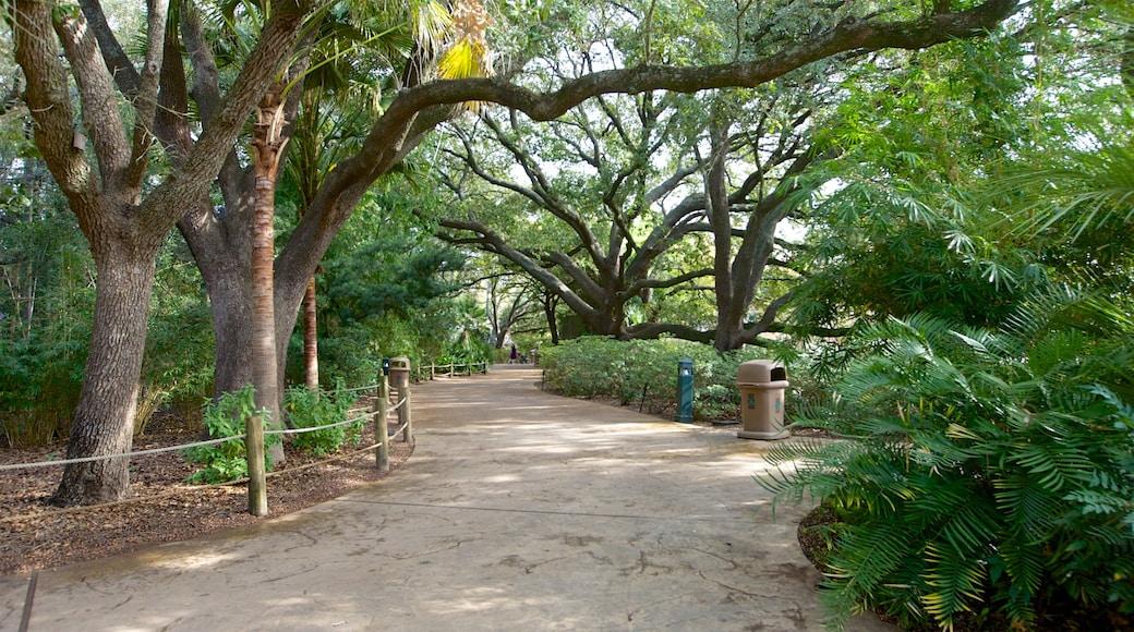 Houston Zoo caracterizando animais de zoológico e um parque