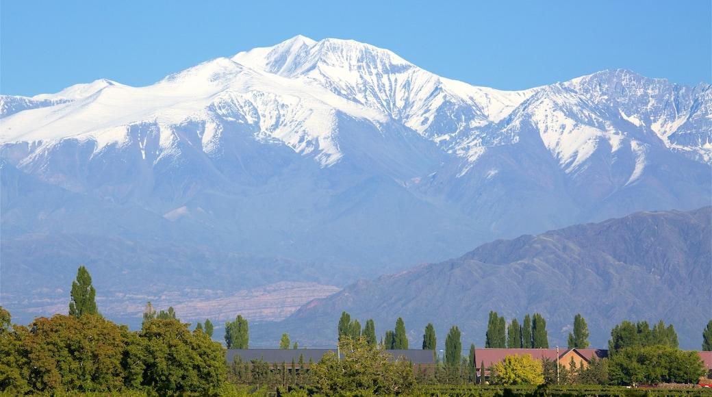 Mendoza Wine Region