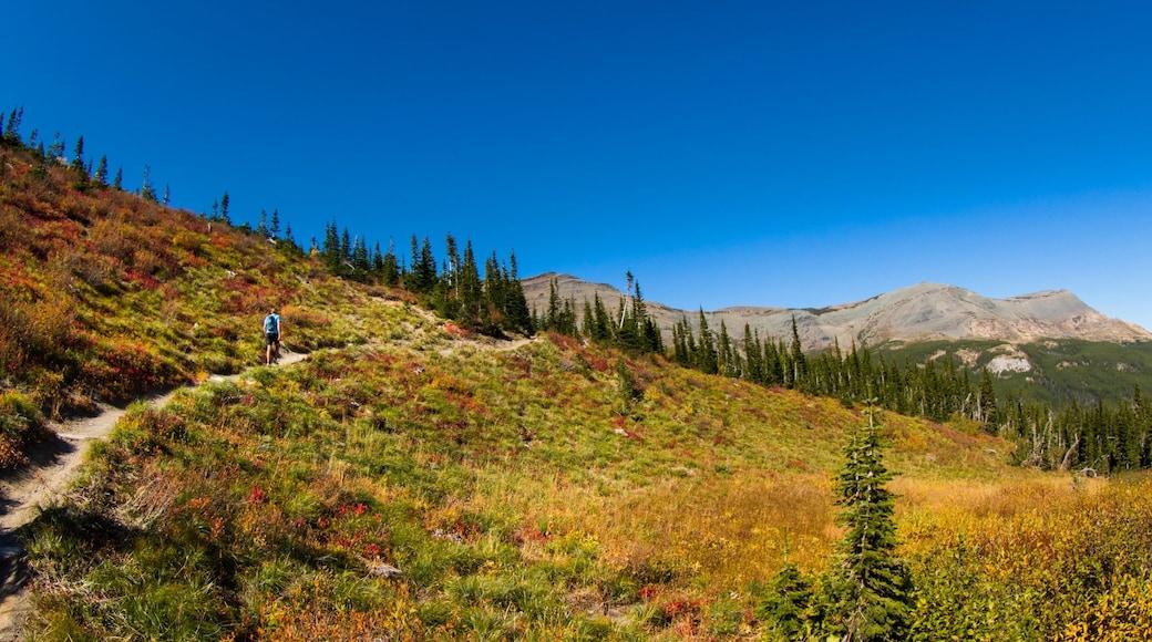 Parque Nacional de los Glaciares que incluye bosques, colores de otoño y montañas