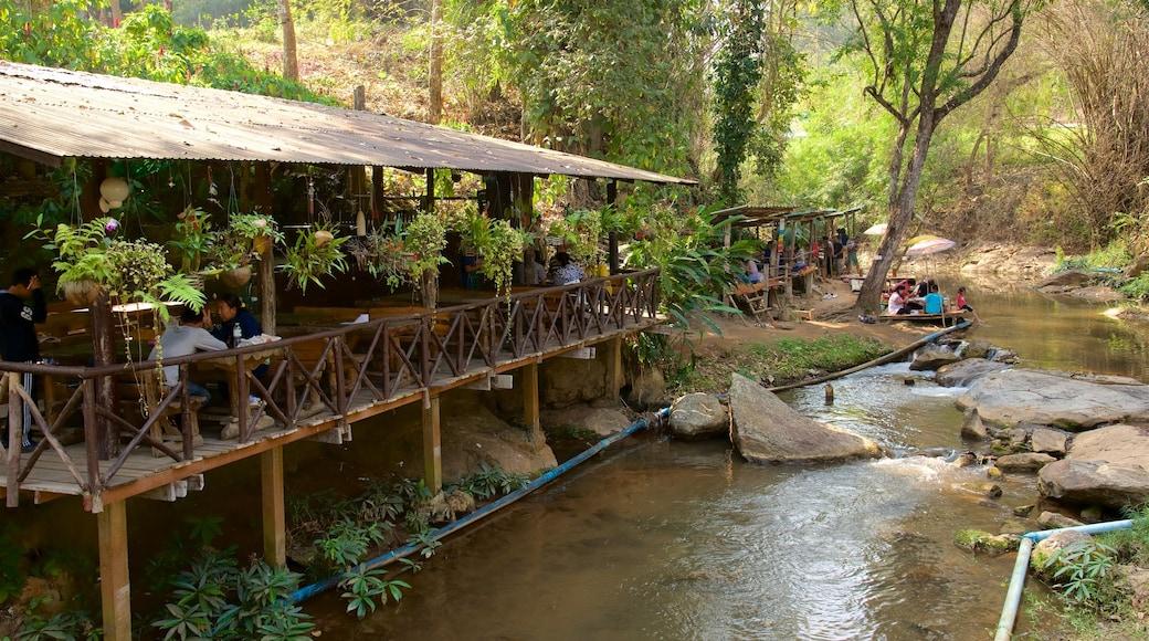 치앙마이 을 특징 강 또는 시내 과 숲