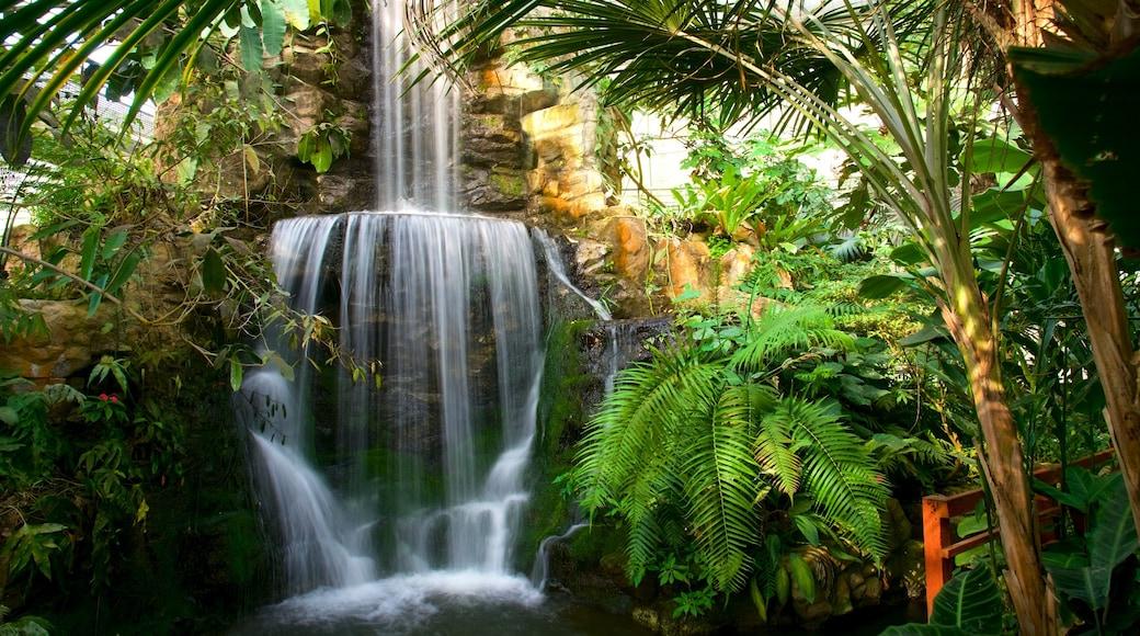 詩麗吉王后植物園 设有 公園 和 瀑布