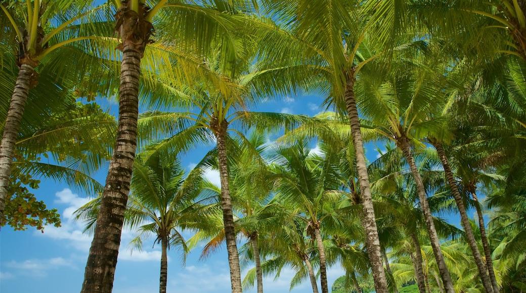 Surin Beach which includes general coastal views
