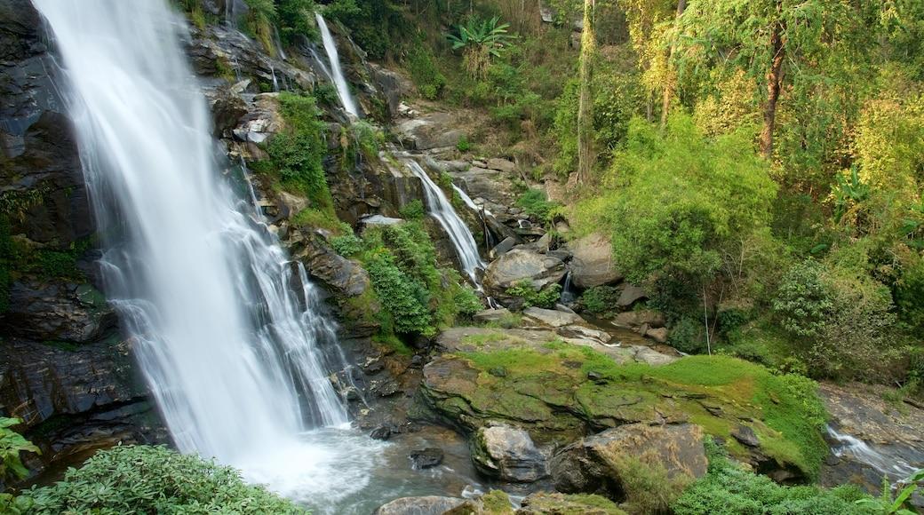도이 인타논 국립공원 을 보여주는 폭포 과 숲