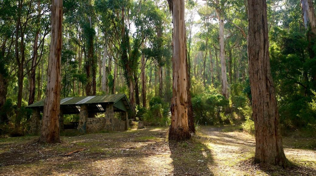 Dandenong Ranges National Park