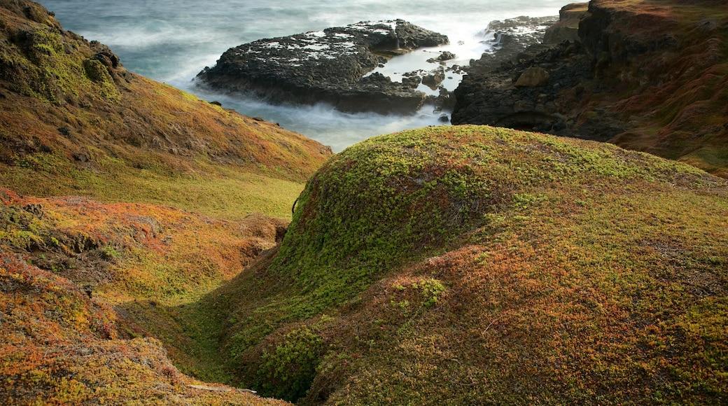 Phillip Island showing rugged coastline