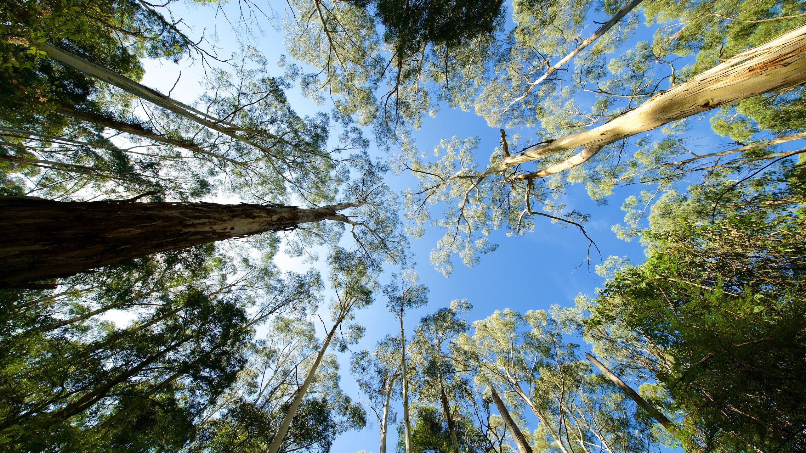 Dandenong Ranges National Park, Melbourne, Victoria, Australië