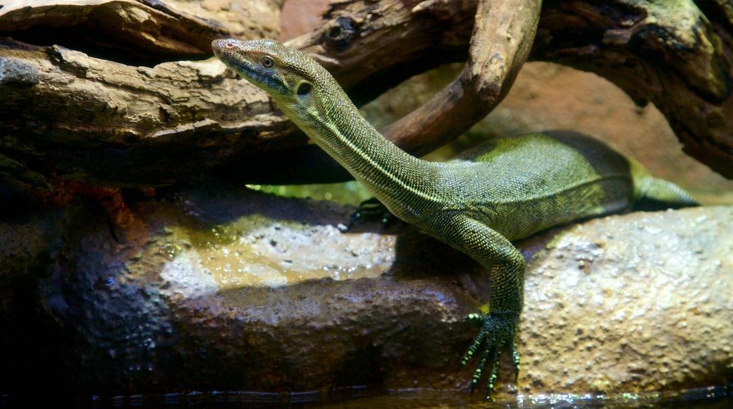 Healesville Wildlife Sanctuary which includes animals