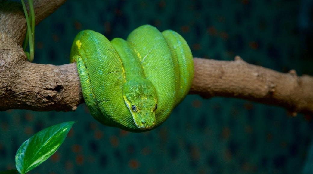Healesville Wildlife Sanctuary showing animals