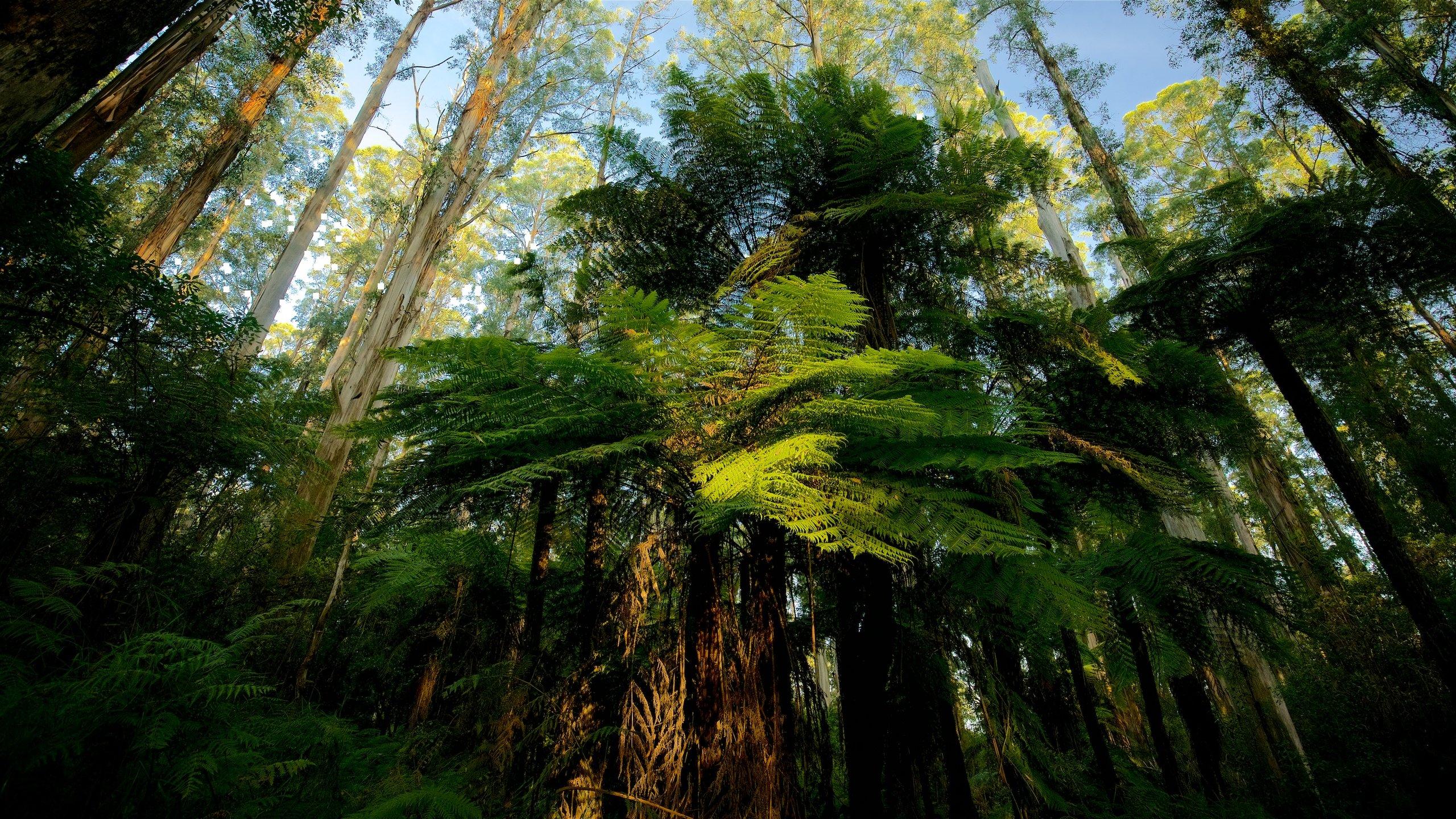 Dandenong Ranges, Melbourne, Victoria, Australia