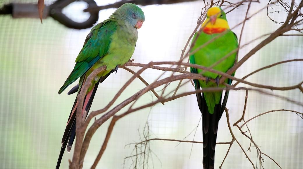 Healesville Wildlife Sanctuary which includes bird life