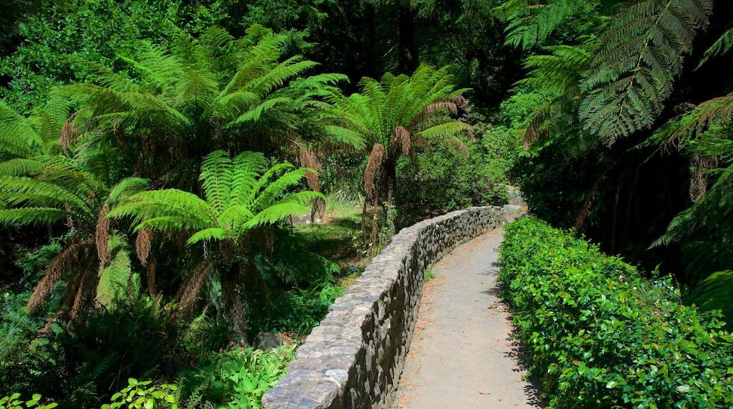 National Rhododendron Gardens caracterizando um parque