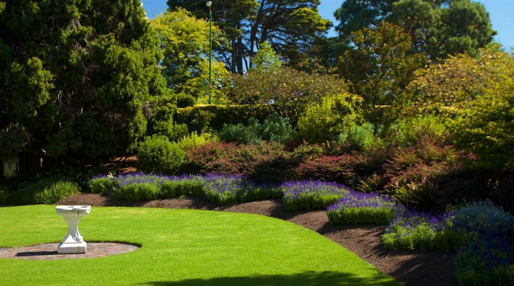Royal Botanic Gardens featuring a garden