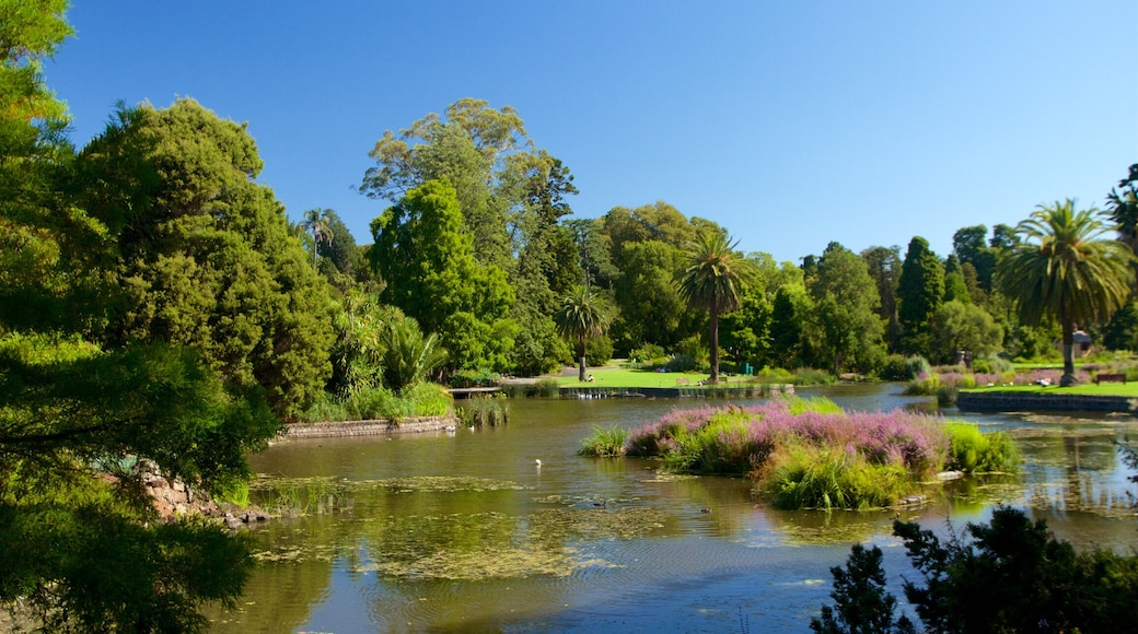 Royal Botanic Gardens which includes a lake or waterhole and a garden