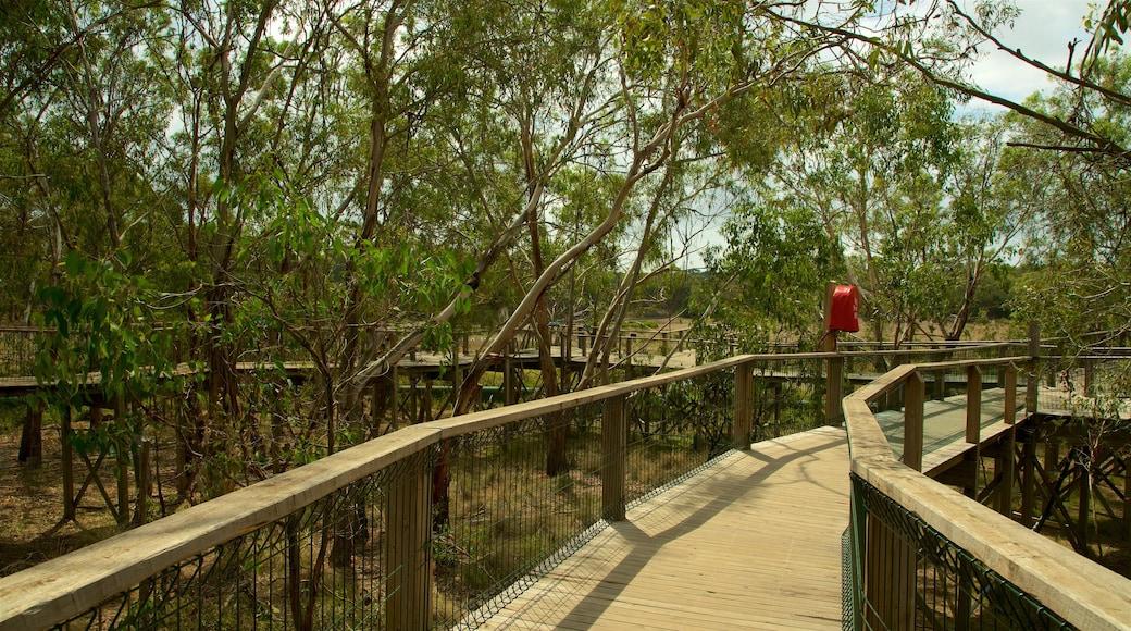 Phillip Island showing a park