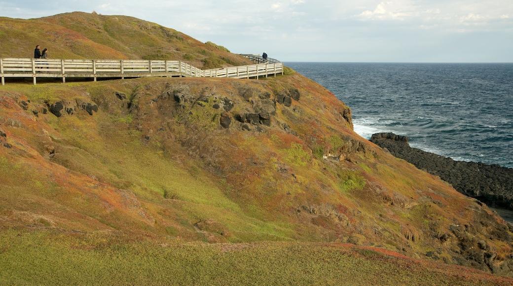 Phillip Island featuring views and rocky coastline