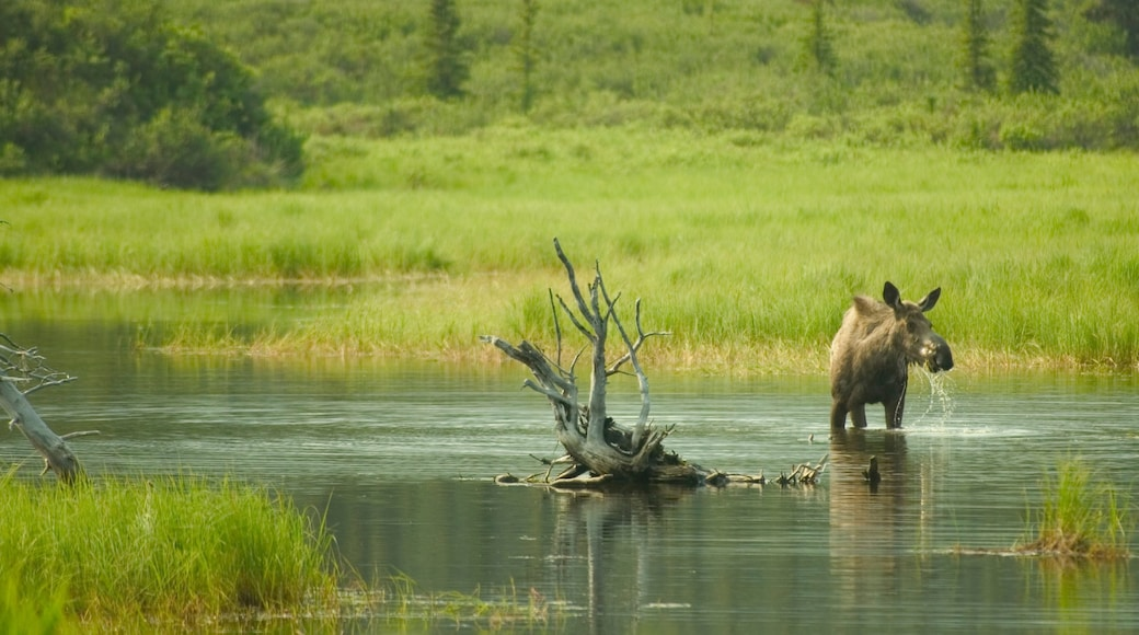 Denali which includes a lake or waterhole, tranquil scenes and land animals