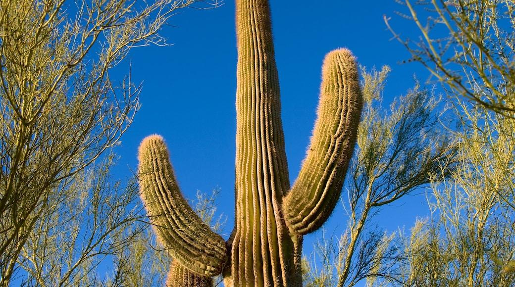 Desert Botanical Garden showing tranquil scenes and desert views