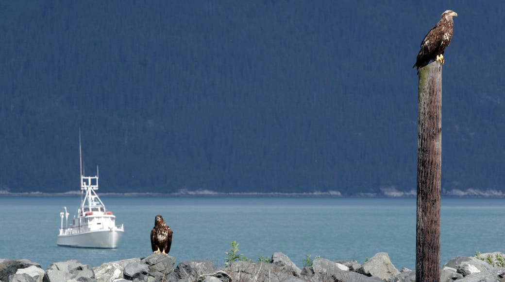 Haines featuring a bay or harbour and bird life