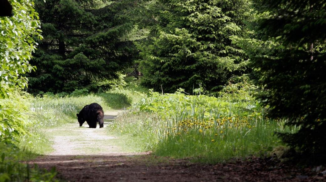 Glacier Bayn kansallispuisto featuring maaeläimet ja metsänäkymät