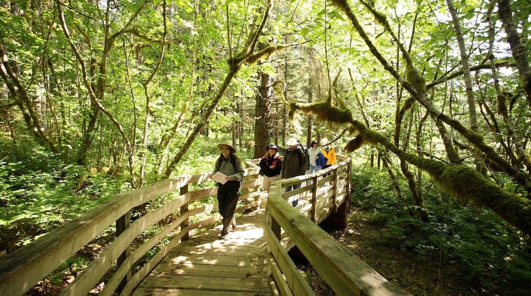 Glacier Bayn kansallispuisto joka esittää metsänäkymät sekä pieni ryhmä ihmisiä