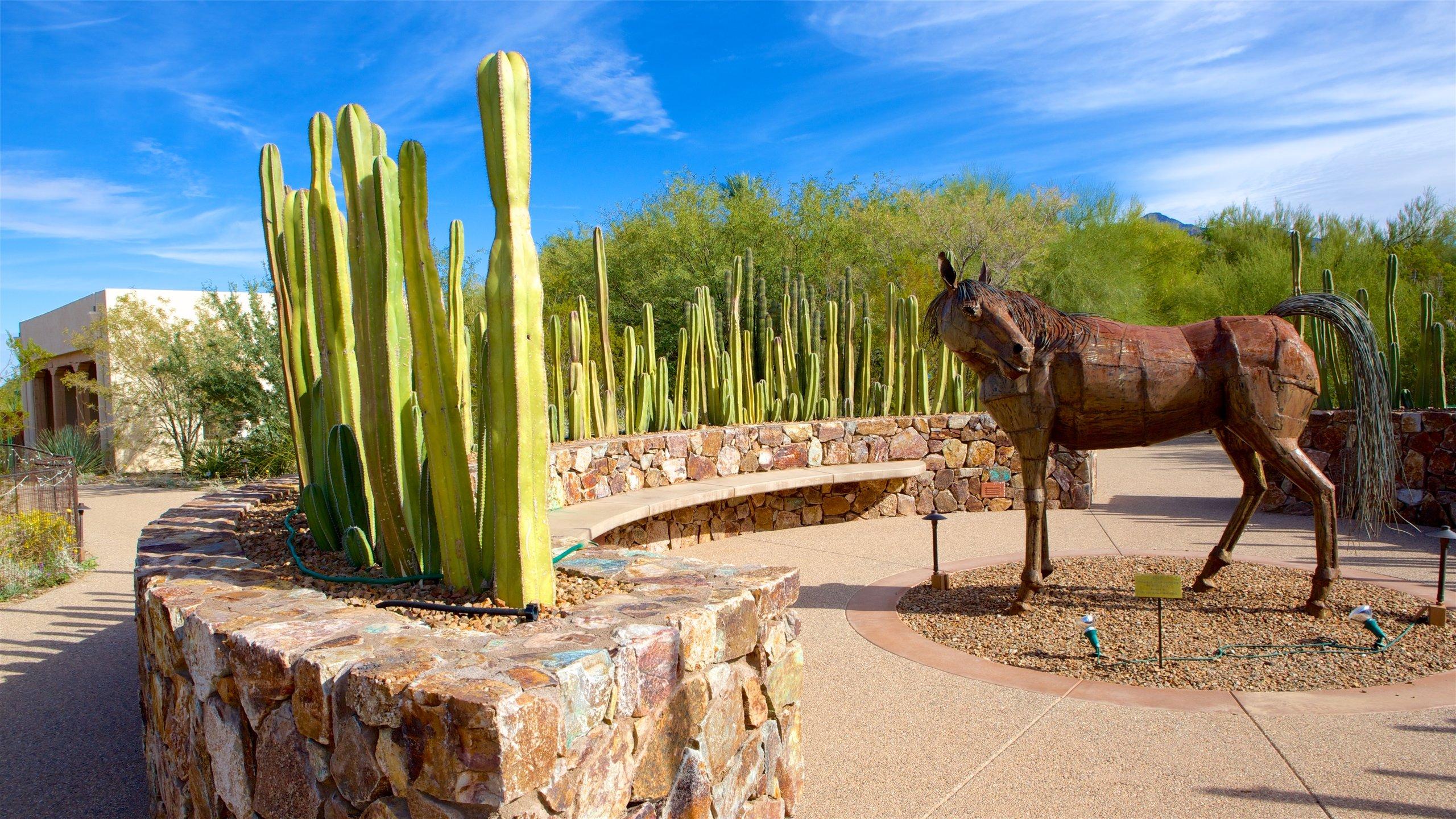 Casas Adobes, Arizona, Verenigde Staten