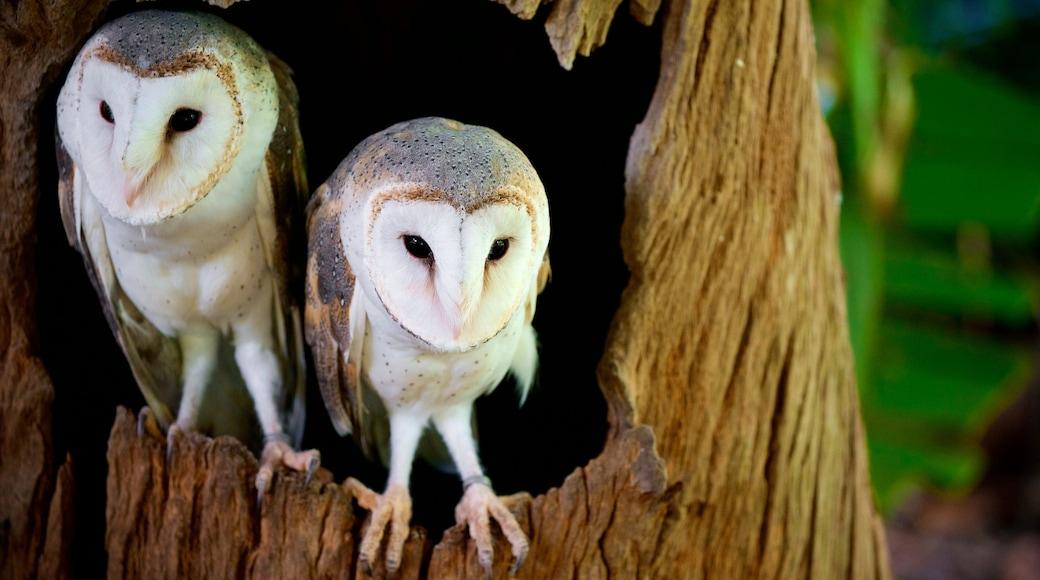 Australian Reptile Park featuring bird life
