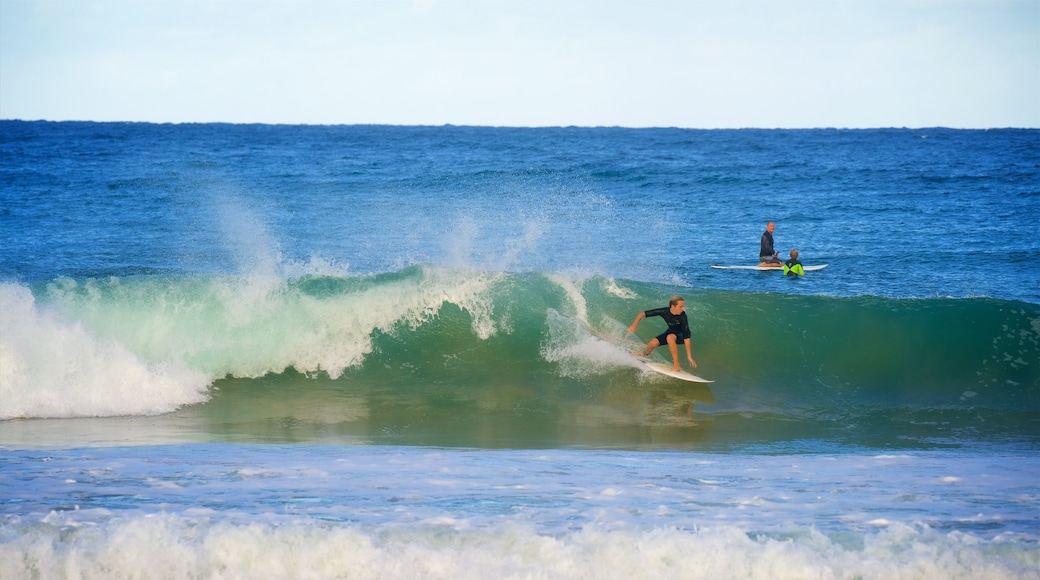 Avoca Beach which includes surfing, waves and a bay or harbour