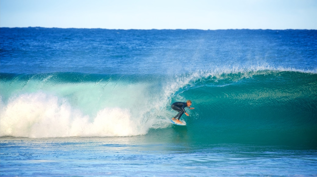 Avoca Beach which includes surfing, a bay or harbour and waves