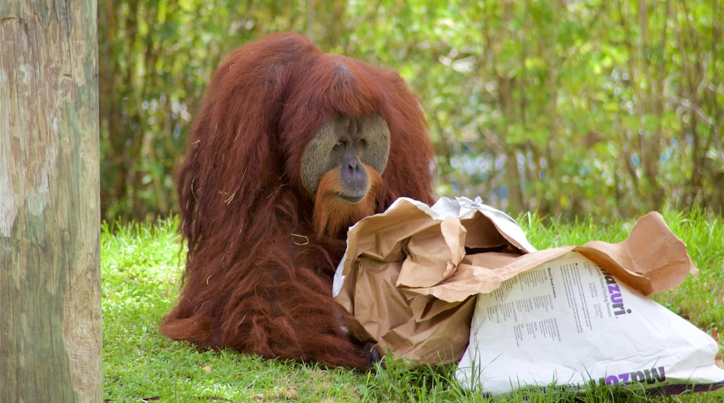 Stadsdierentuin van Miami bevat dierentuindieren en dieren