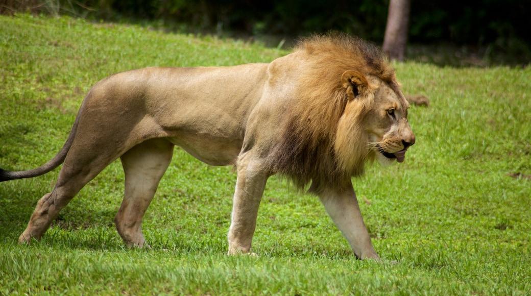 Stadsdierentuin van Miami inclusief gevaarlijke dieren en dierentuindieren