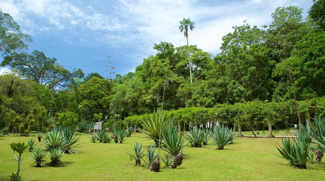 Jardín Botánico de Río de Janeiro ofreciendo un parque