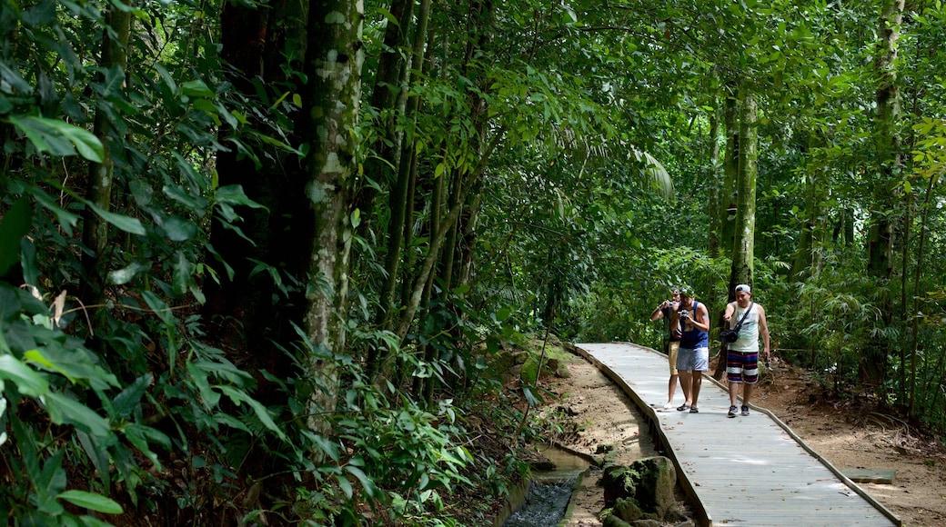 Jardín Botánico de Río de Janeiro mostrando selva y caminatas