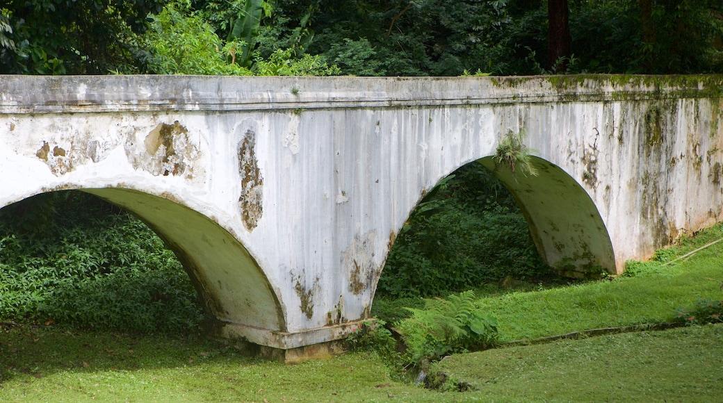 Jardín Botánico de Río de Janeiro mostrando selva y un puente