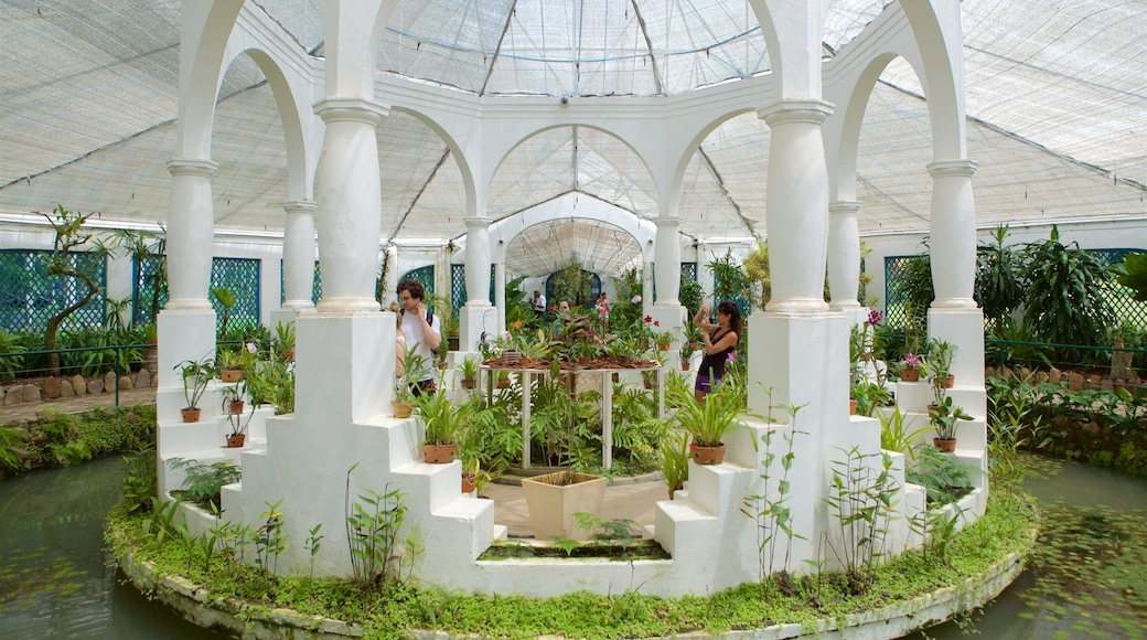 Jardín Botánico de Río de Janeiro que incluye jardín, vista interna y un estanque