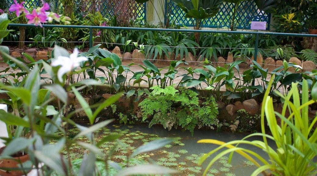 Jardín Botánico de Río de Janeiro que incluye un estanque y un parque