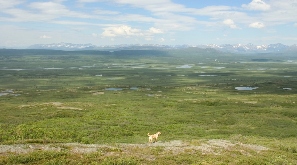 Far North Alaska showing cuddly or friendly animals and tranquil scenes