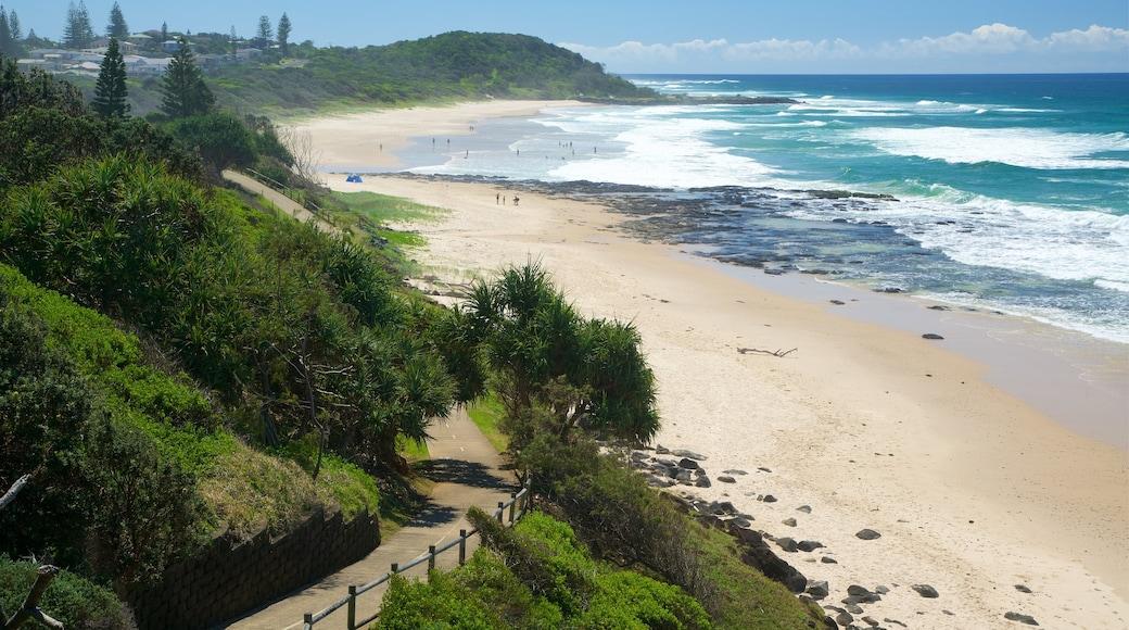 Shelly Beach showing a beach