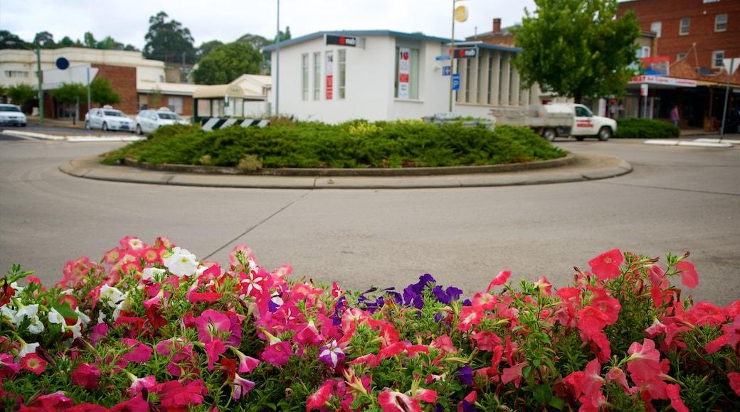 庫馬 其中包括 花朵 和 街道景色