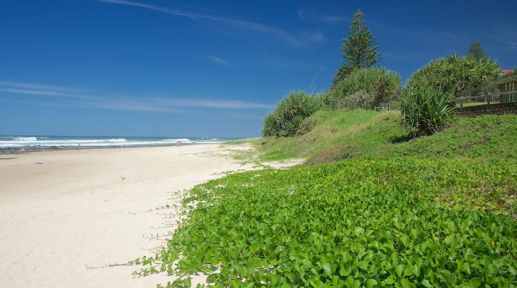 Shelly Beach showing a sandy beach