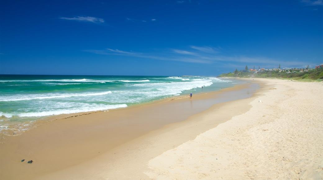 Shelly Beach featuring a sandy beach