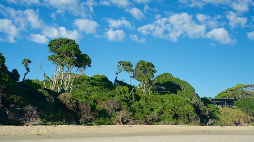 Main Beach which includes mangroves