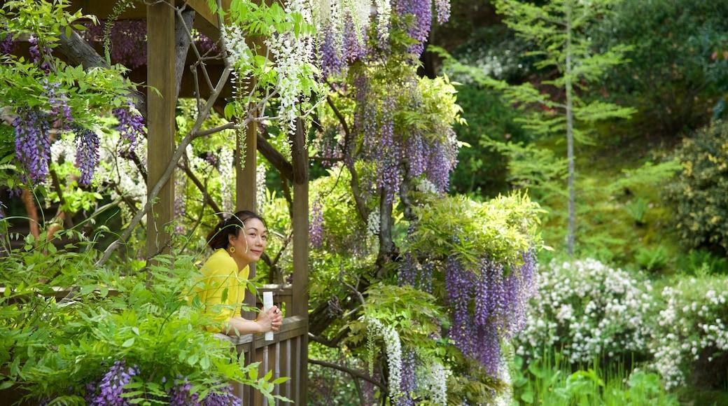Saratoga mostrando um jardim assim como uma mulher sozinha