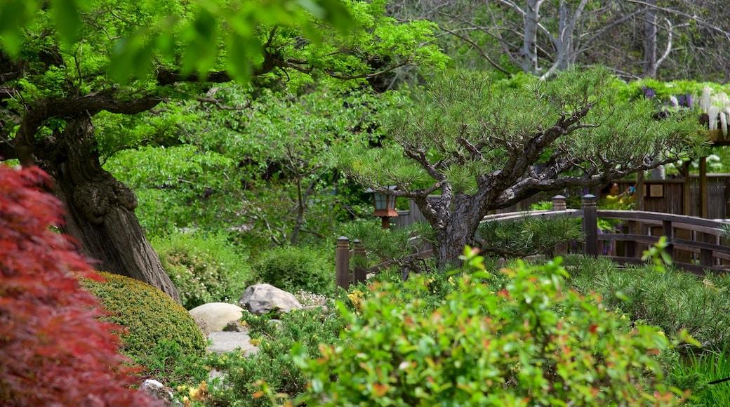 Hakone Gardens which includes a garden