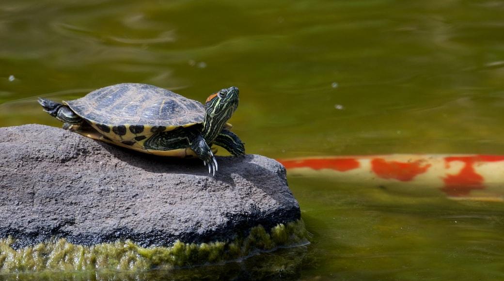 Hakone Gardens que inclui vida marinha e um jardim