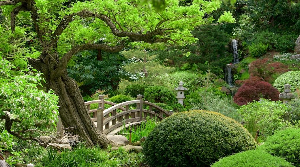 Hakone Gardens showing a garden