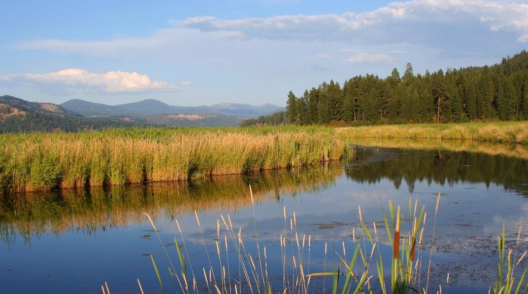 Harrison joka esittää joki tai puro, rauhalliset maisemat ja suo